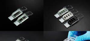 SPL_Cell_Culture_Slide_12F22F42F8_Chamber_Slides__SPL_Hybrid