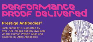prestige-antibodies